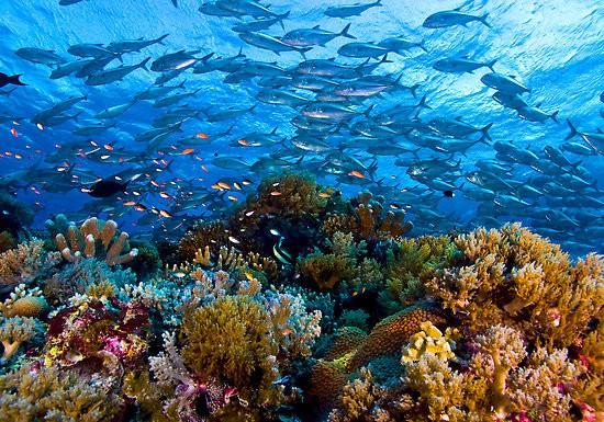Tubbataha-Reefpanduanwisata